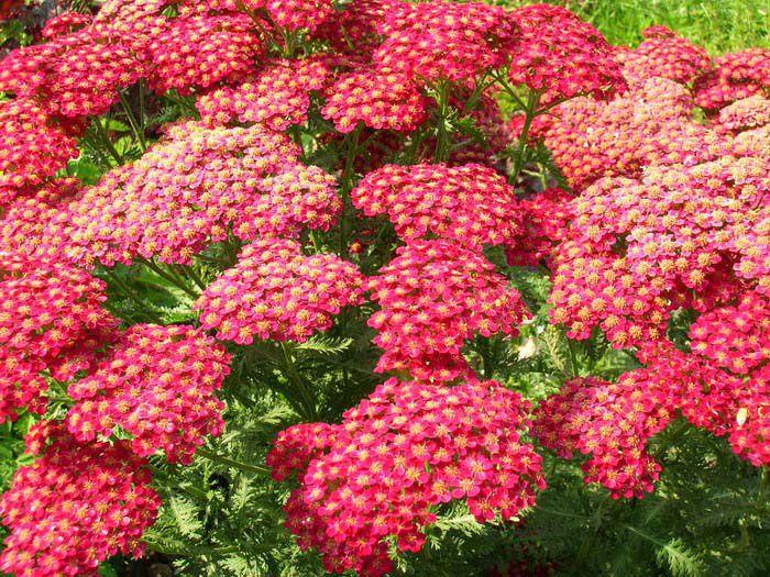 Фото уличных цветов садовых