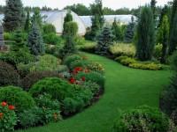 Акция на хвойные и лиственные растения покупаем 3 – получаем 4!