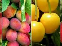Какие плодовые растения предпочитают садоводы