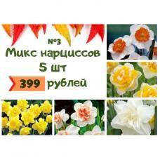 Микс №3 Нарциссы 5 шт