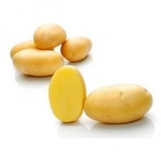 Картофель семенной Примадонна (1кг/уп)