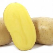Картофель семенной Вега (1кг/уп)