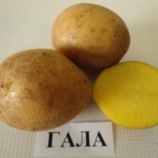 Картофель семенной Гала (1кг/уп)