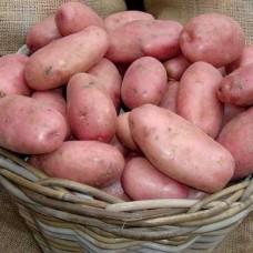 Картофель семенной Ред Леди (1кг/уп)