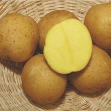 Картофель семенной Кибиц (1кг/уп)