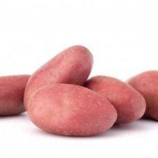 Картофель семенной Ред Соня (1кг/уп)