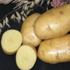 Картофель семенной Импала (1кг/уп)