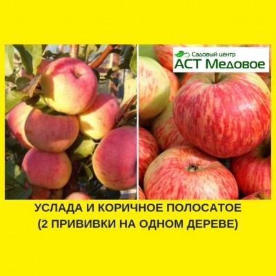 Яблоня с 2-мя прививками УСЛАДА + КОРИЧНОЕ ПОЛОСАТОЕ 3-х летнее ЗКС
